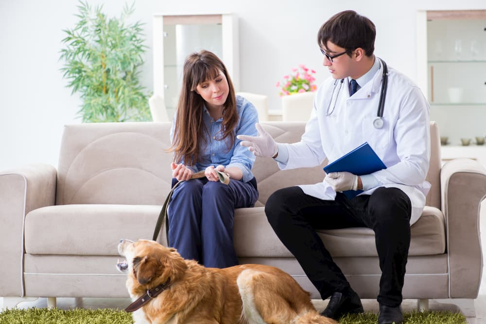 5 Surprising Things Clients Ask About Their Pet's Health