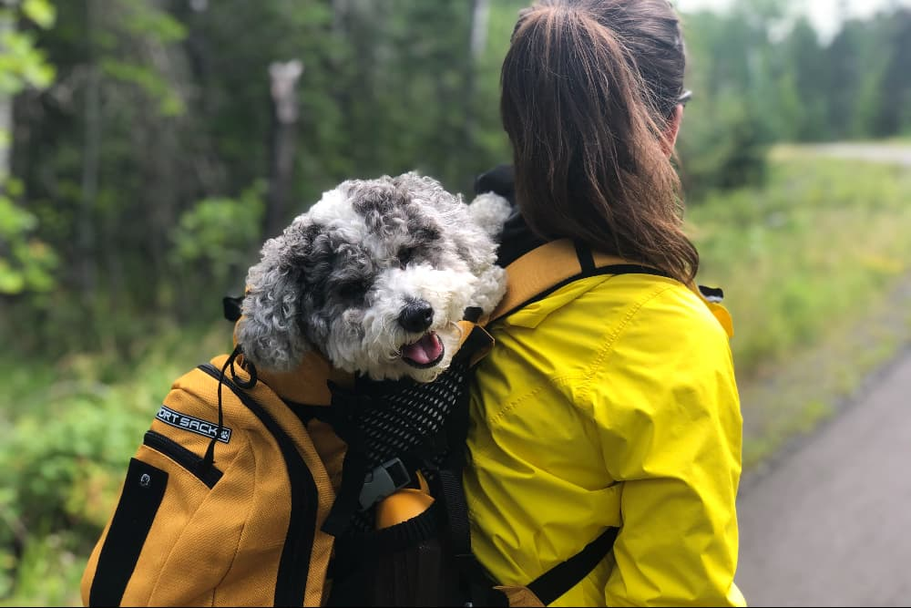 Dog in a backpack being carried while hiking