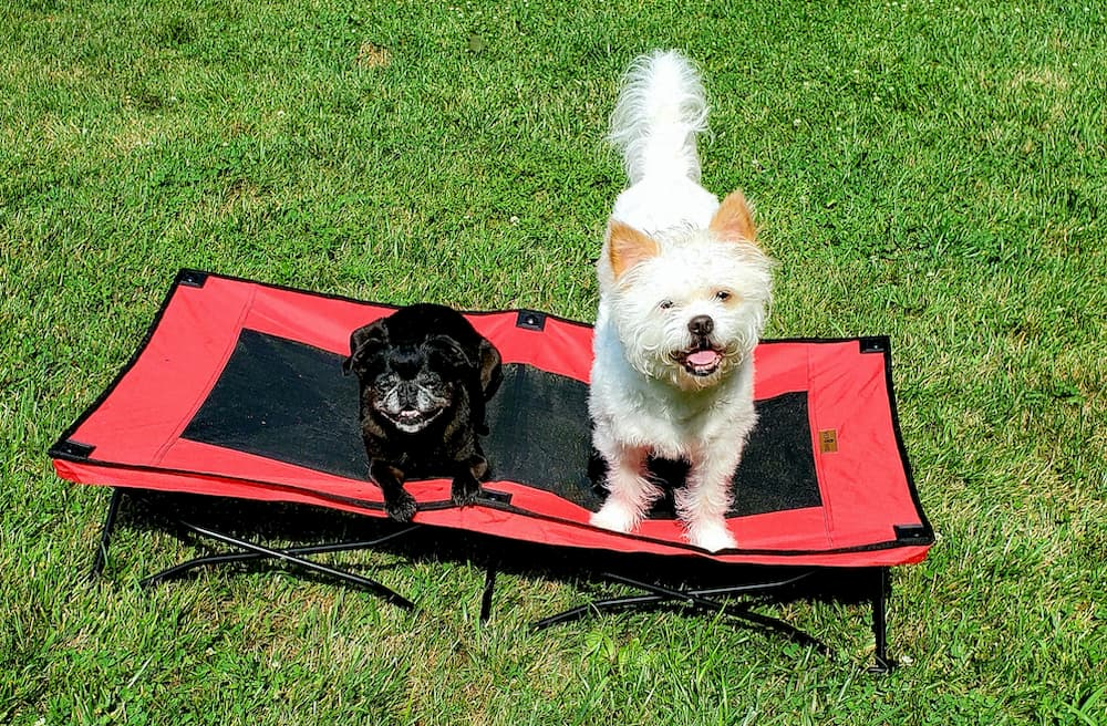 Foldable dog bed for camping