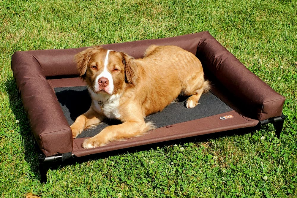 Best Elevated Dog Beds for Getting Your Pup Up Off the Ground