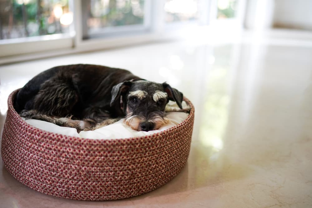 Tired dog sleeping on bed