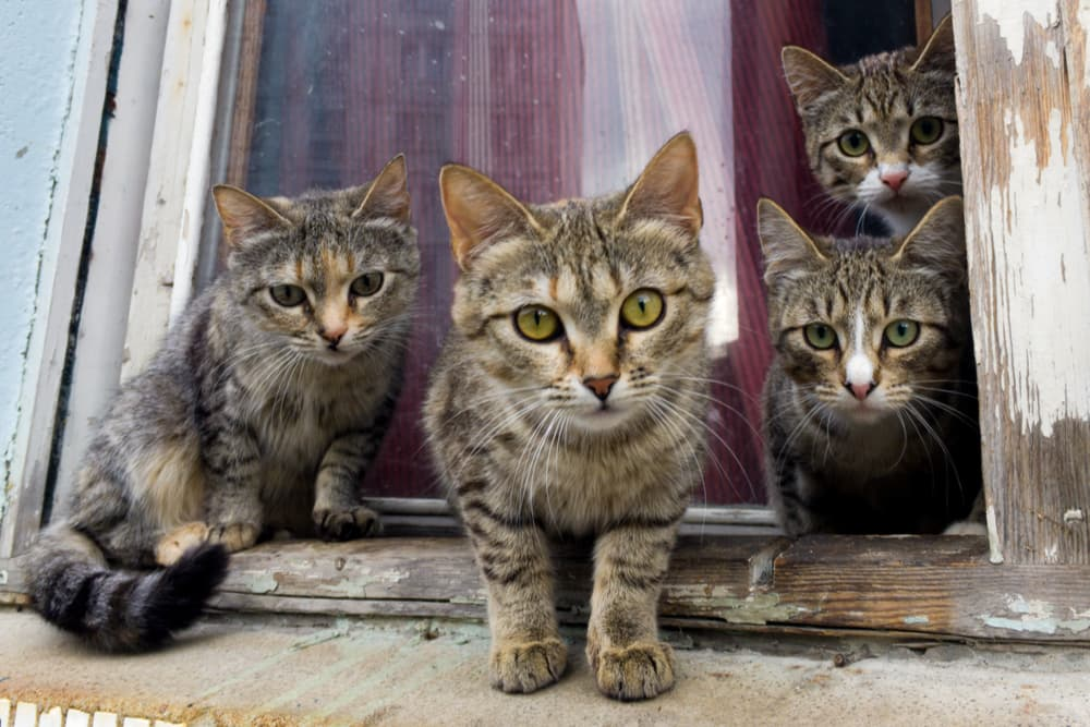 Group of cats sitting on a windowsill