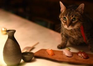 Cat and sushi at restaurant