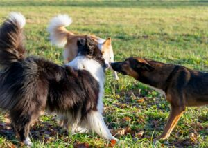 Group of dogs meeting outdoors