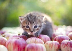 Kitten in apple orchard