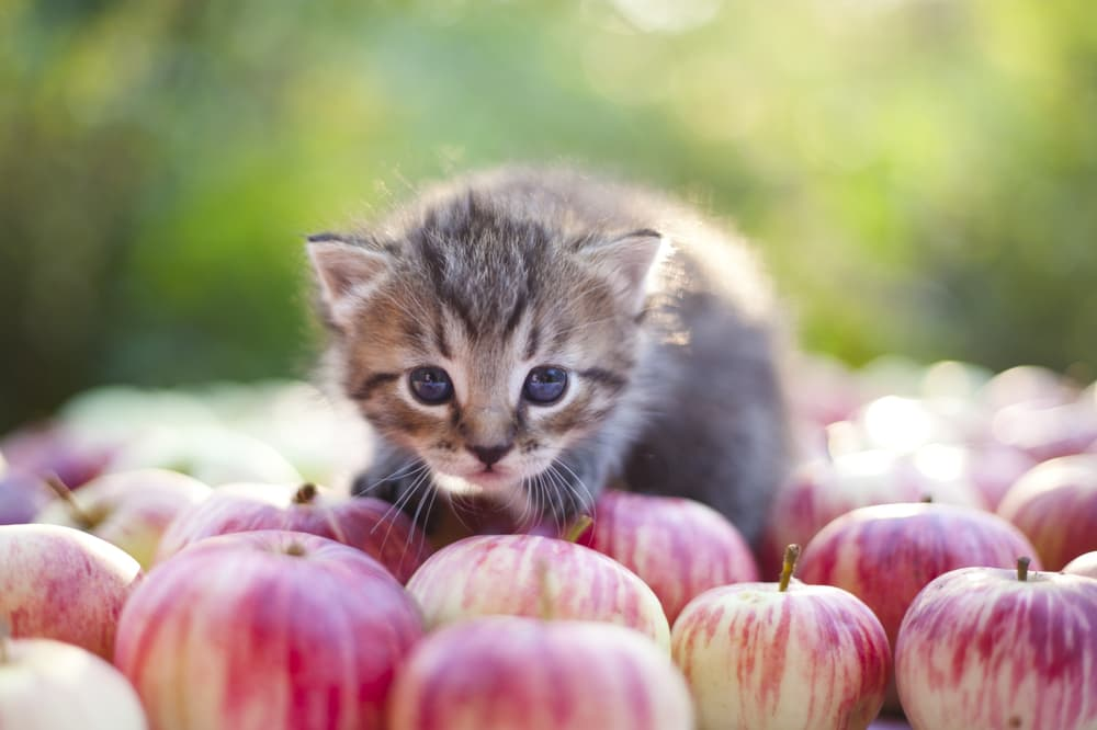 Kitten in apple orchard
