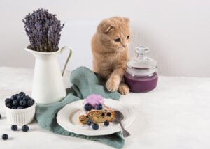 cat surrounded by pastries and jam