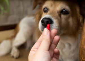 Woman holding up a pill in front of a dog