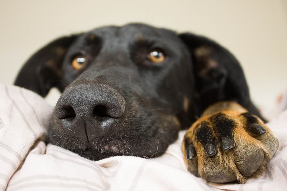 7 Ways to Tell Your Dog's Nails Are Too Long