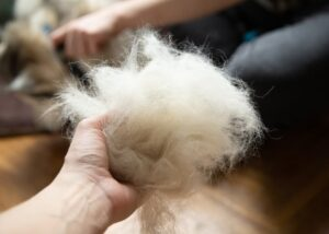 Pet owner holding handful of dog hair