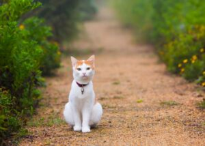 Cat sitting on a path outside