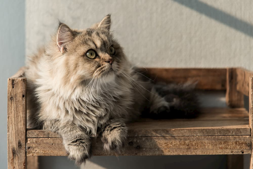 Cat laying on a wooden stool outside