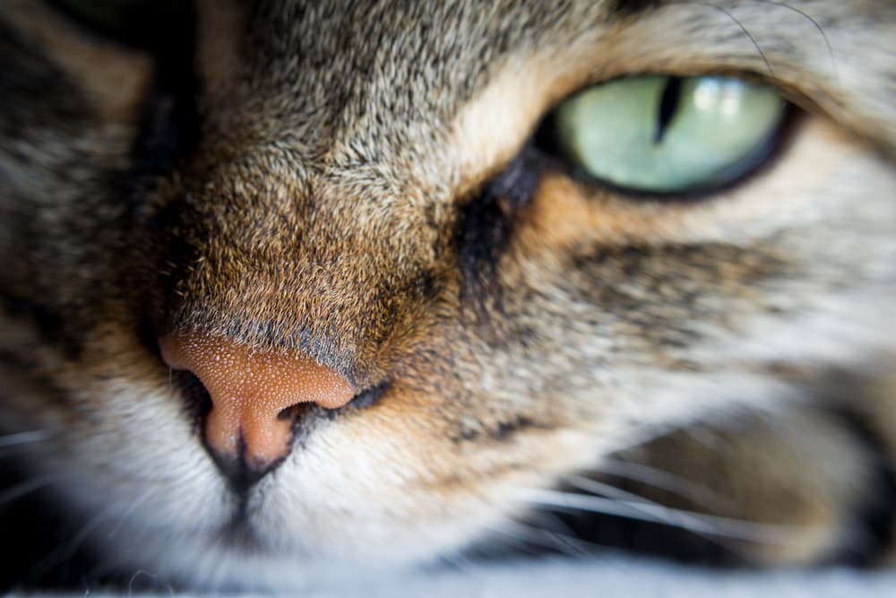 Close up of cute cat and its nose