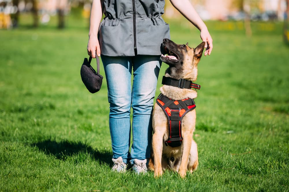 14 Things Dog Trainers Want You to Know
