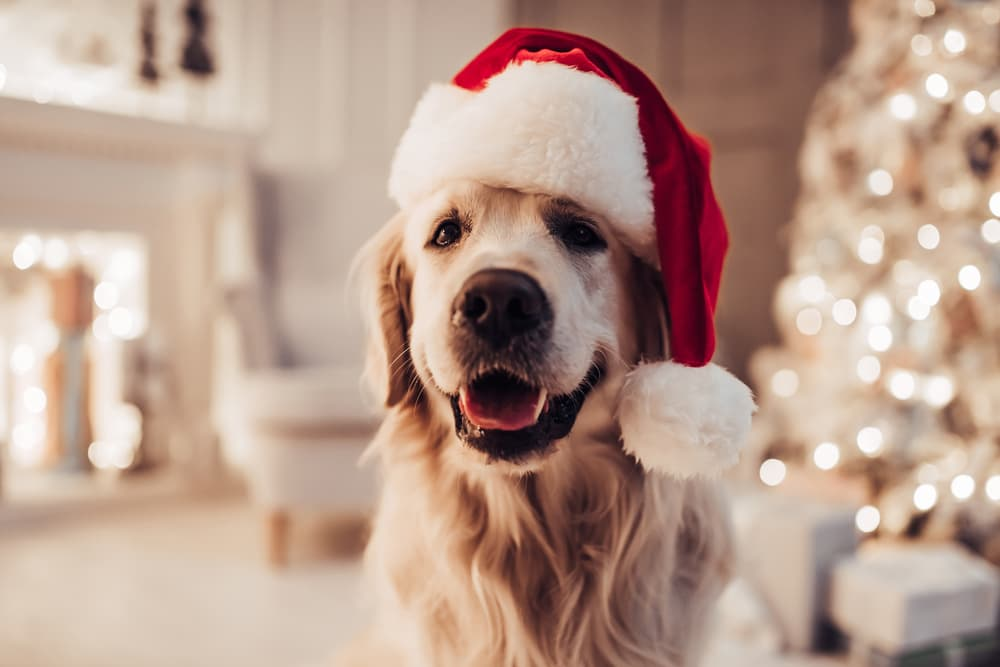 40 Christmas Dog Names to Love All Year Long