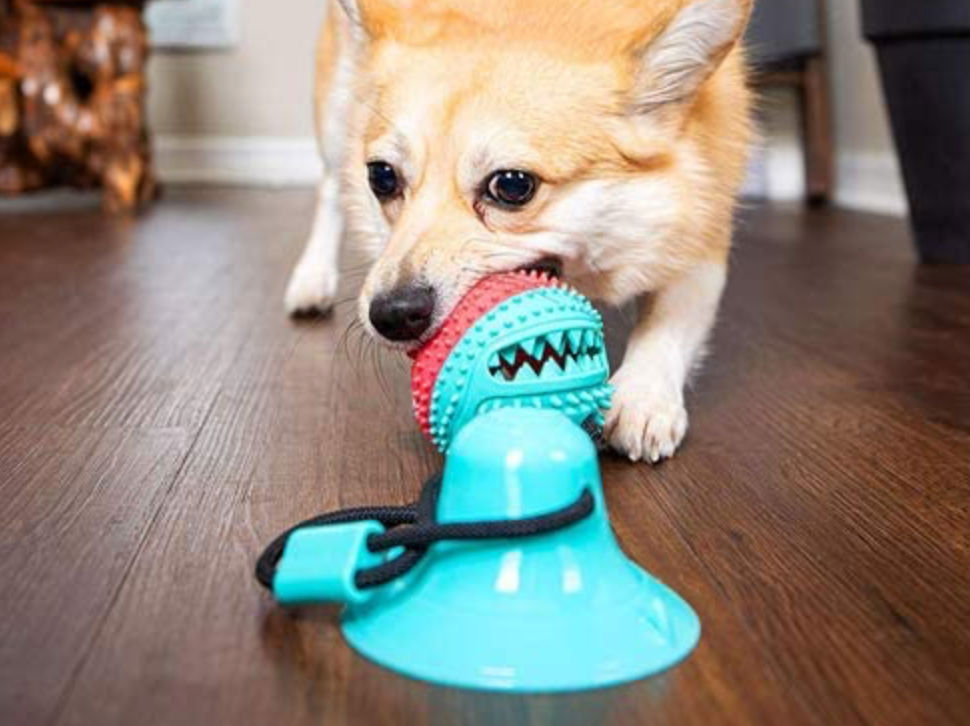 7 Best Joint Supplements For Dogs