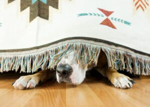 dog hiding under bed