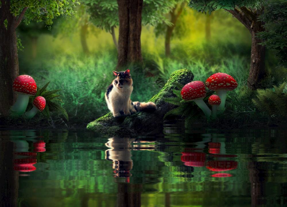 Cat in a fantasy mushroom world