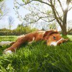 Dog lying in grass