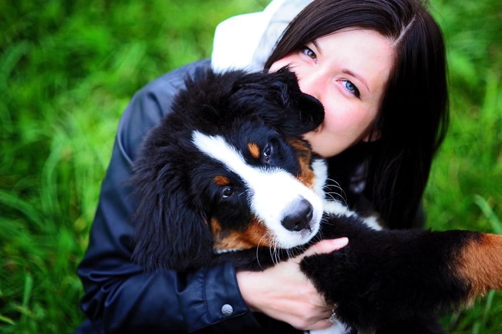 Woman hugging a Bernese Mountain Dog