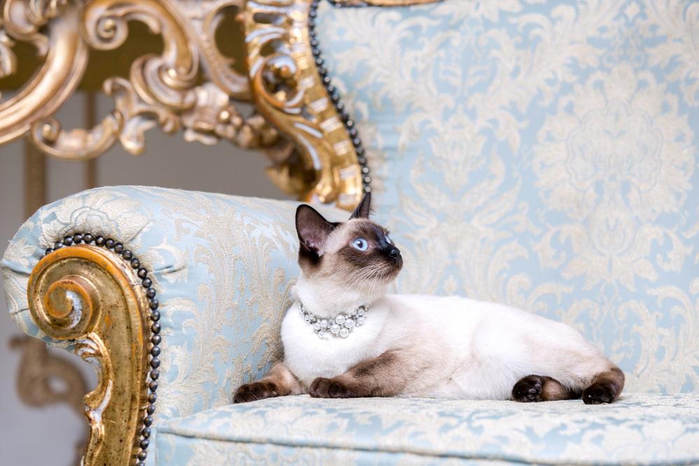 Regal looking cat on fancy chair