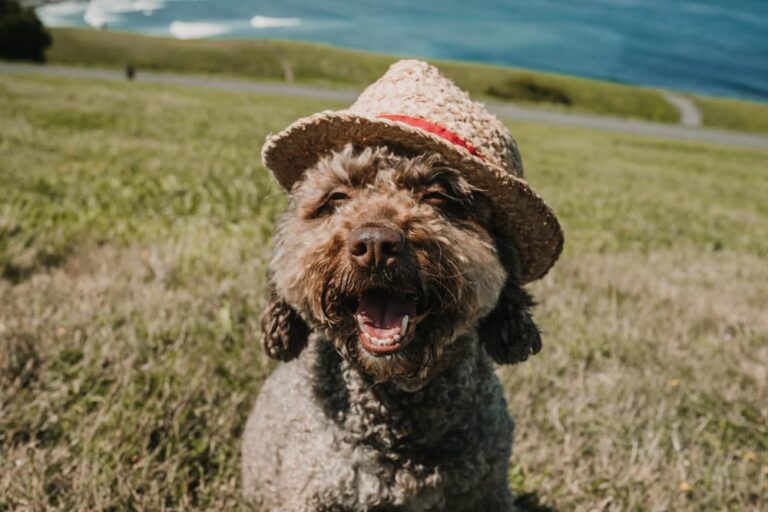 Dog in Northern Spain in a hat