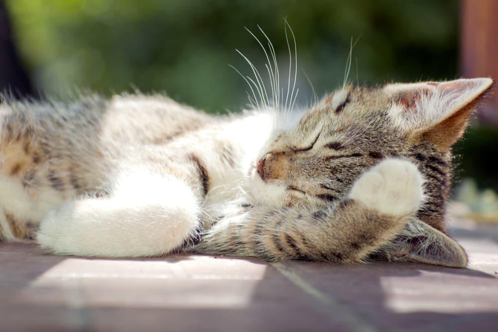 Kitten laying outside