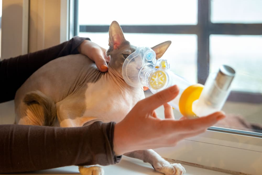 Woman taking care of cat using inhaler
