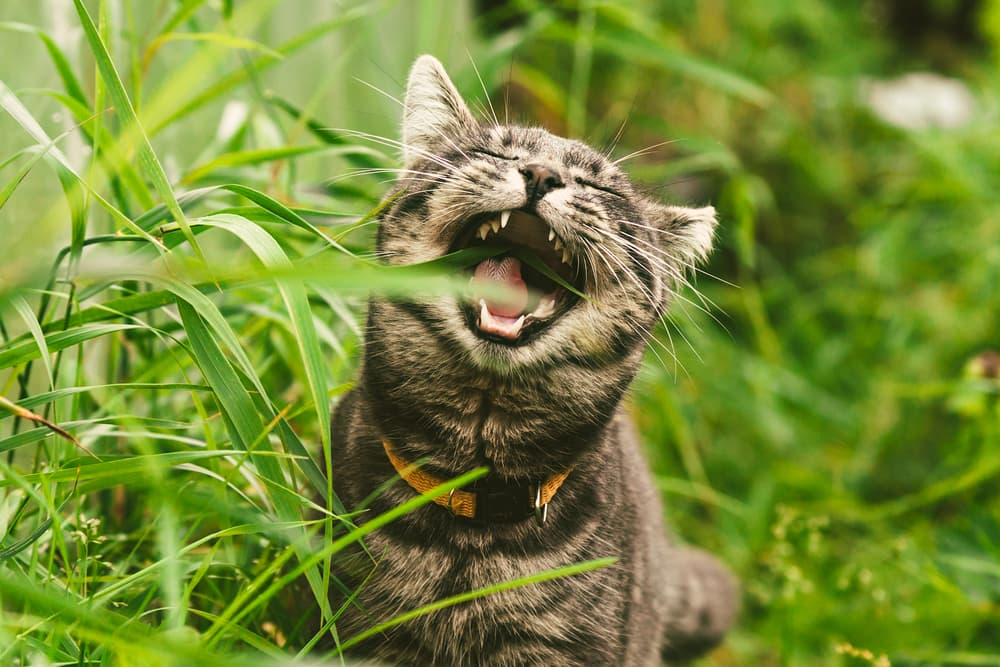 Cat eating plant outside
