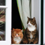 Two cats happy at home on the windowsill