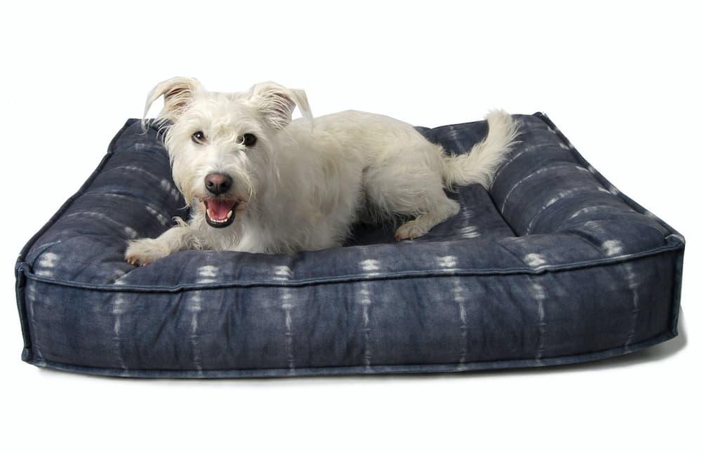 Dog laying on dog bed