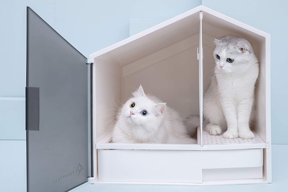 Two cats in a litter box house
