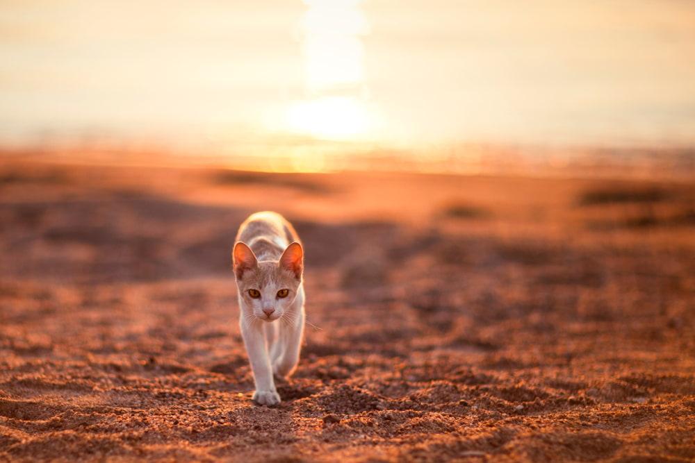 Cat walking on sand