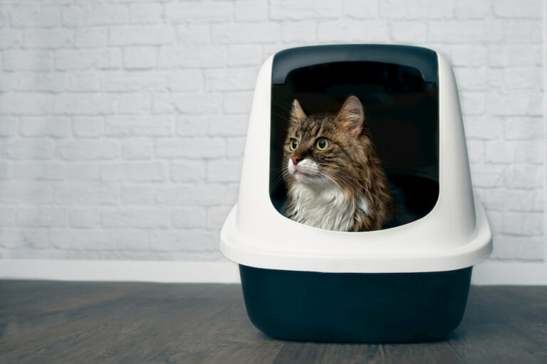 Cat in a dog-proof litter box