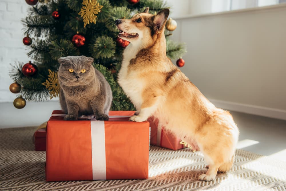 The 2020 Great Pet Care Gift Guide: Top Picks for Your Pets