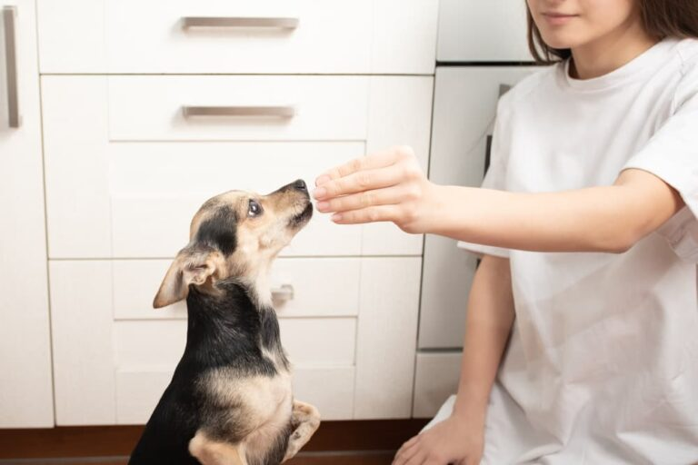Woman giving dog probiotic supplement