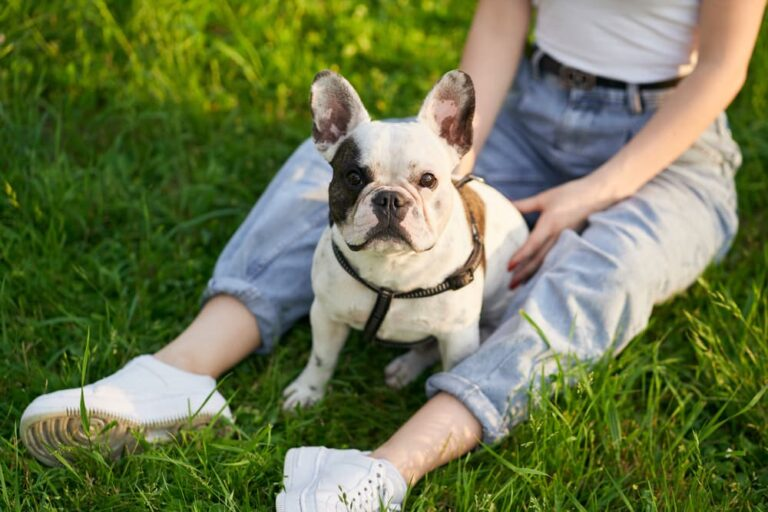 Woman sitting outside with French Bulldog
