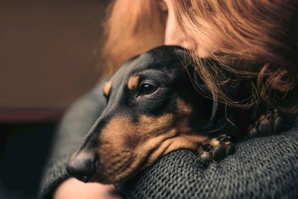 4 Weird Ways Stress Can Affect Your Dog
