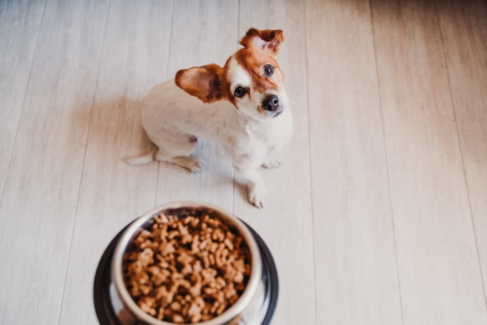 Calcium for Dogs: Why They Need It