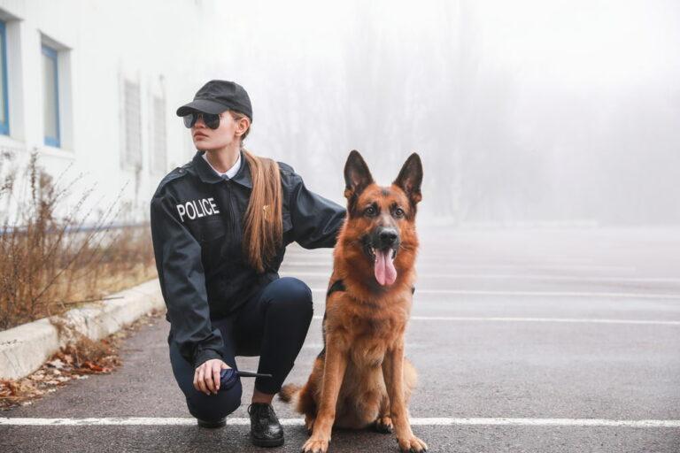 Police woman with German Shepherd dog breed