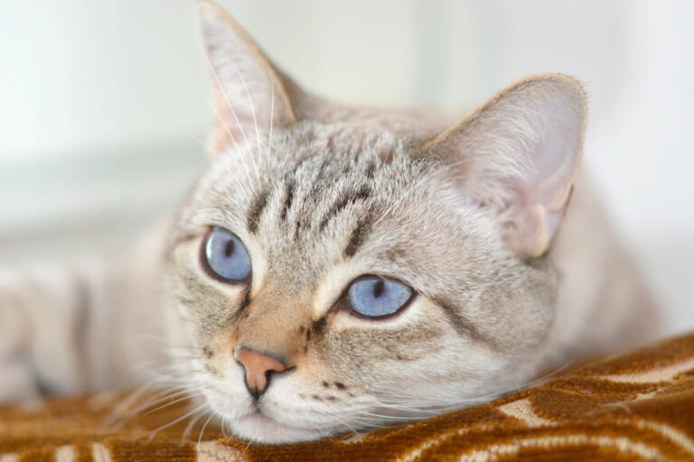 Cat with kidney disease