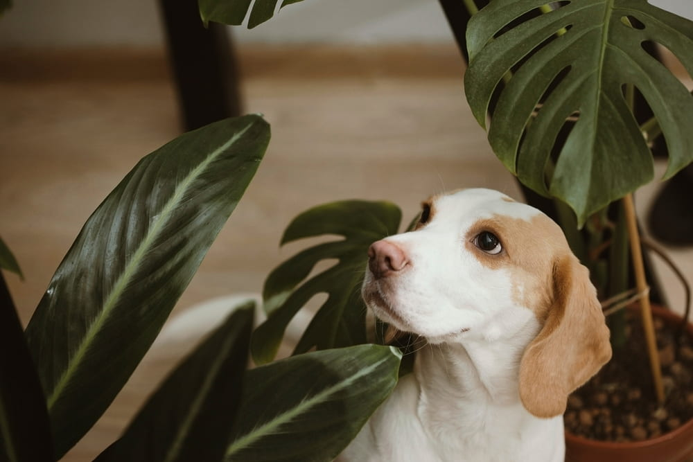 Are These Plants Toxic to Dogs? A Look at Common Varieties