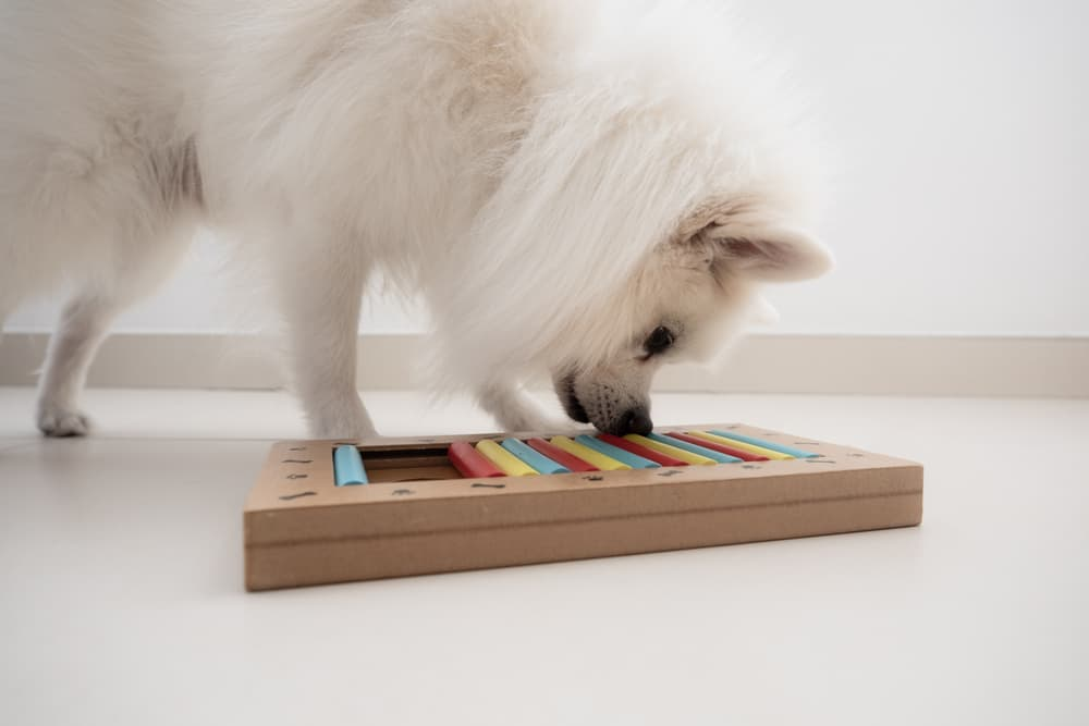 Dog with puzzle toy