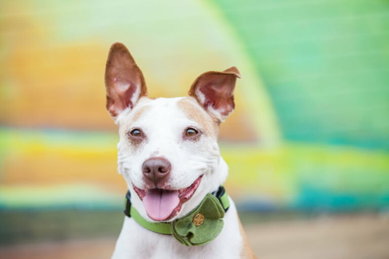 Dog in fancy collar