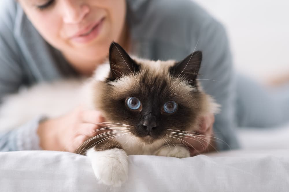 Woman petting cat on bed
