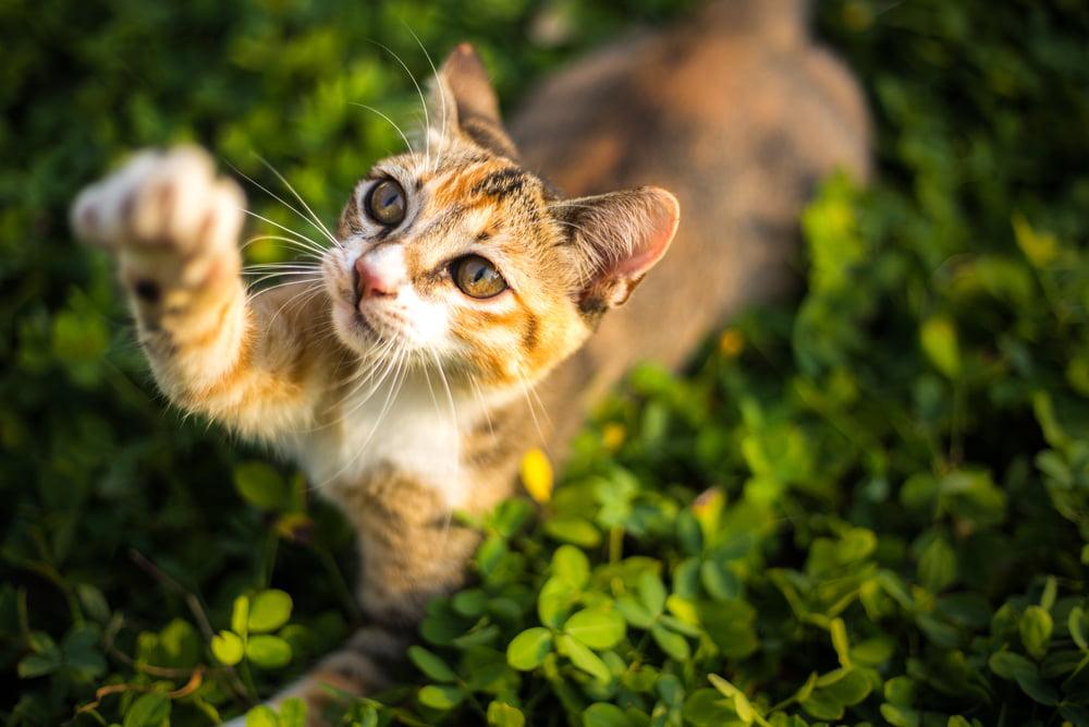 Outdoor cat scratching