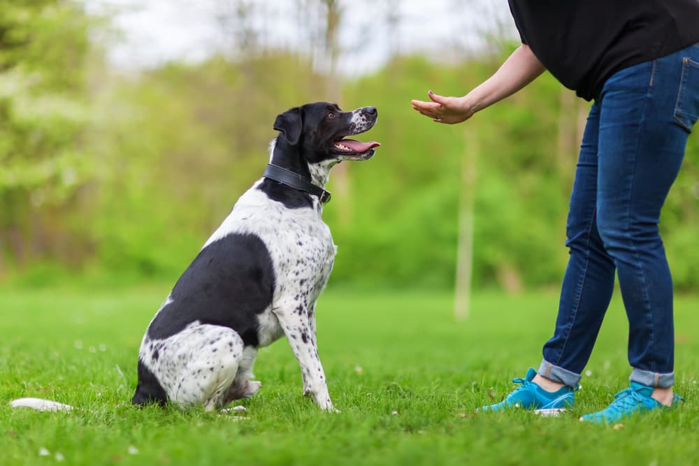 Woman practicing dog training