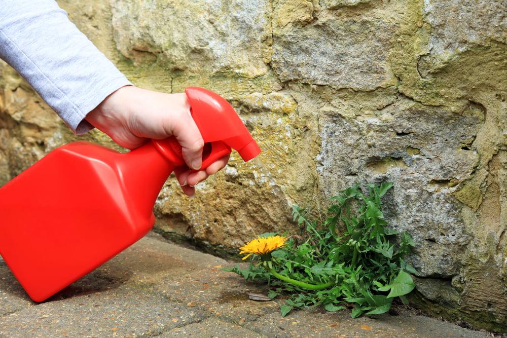 Woman spraying weed killer