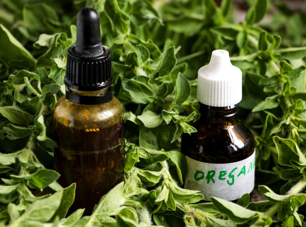 Fresh oregano with oregano oil