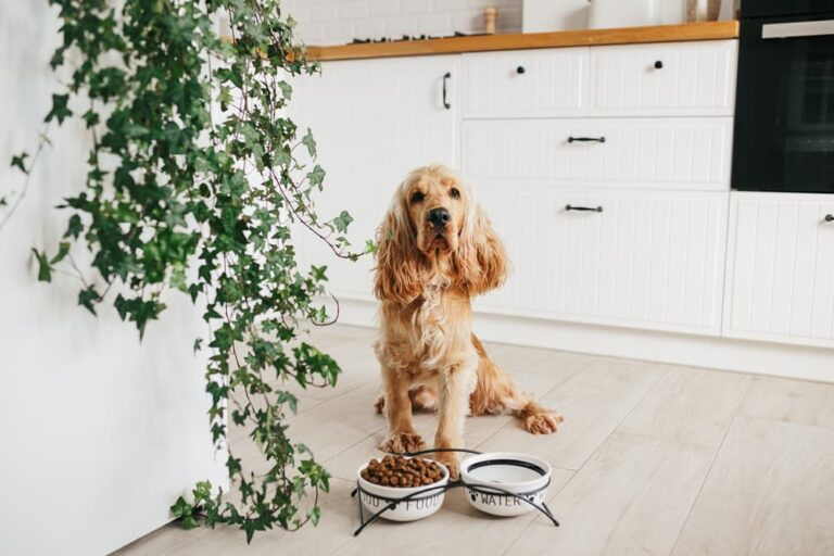 Dog in kitchen with plants